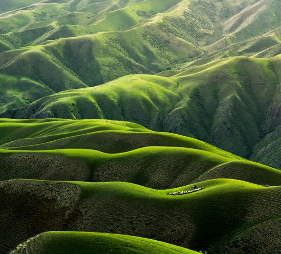 Pastos verdes China